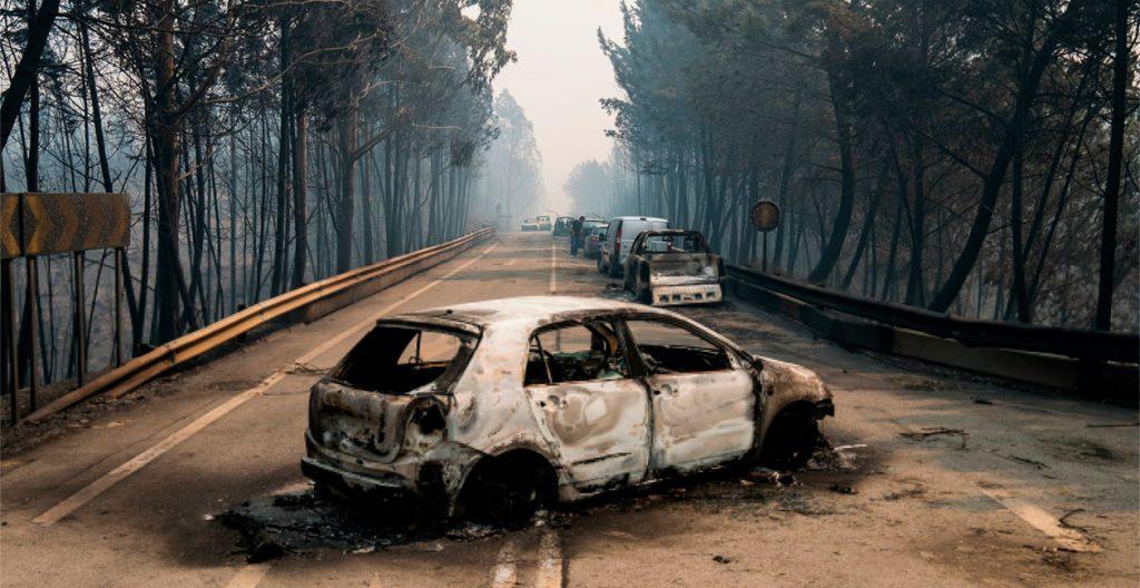 COIMAS PESADAS para quem não limpa as matas queimadas pelos incêndios