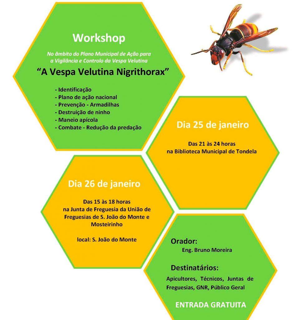 VESPA VELUTINA: tema de dois Workshops em Tondela e S. João do Monte